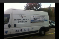 Beaver Pest Control LLP - London, UK