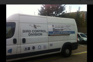 Beaver Pest Control LLP London