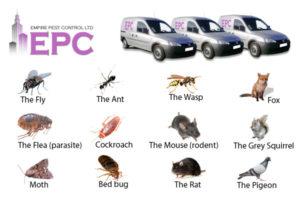Empire-Pest-Control-London