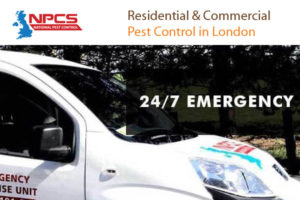 National-Pest-Control-Services-UK