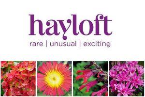 Hayloft Plants Pershore Worcestershire