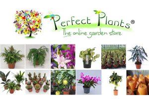 Perfect Plants Ltd