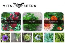 Vital Seeds Devon UK
