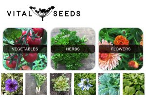 Vital Seeds Devon UK