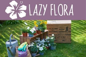 Lazy Flora
